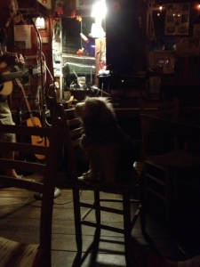There's a great little bar at Paynes Dock. The owner performs most nights singing mostly old Irish tunes with an eclectic mix of other selections. His dog, Zippy, sits up on a chair and watches him adoringly or naps or barks at all the men who walk in (never the women).
