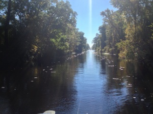 Peaceful Swamp