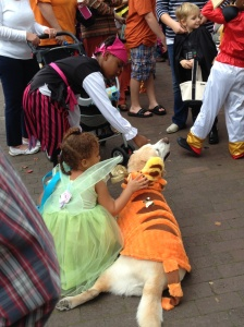 Halloween in Edenton! Even the dogs were in costume!