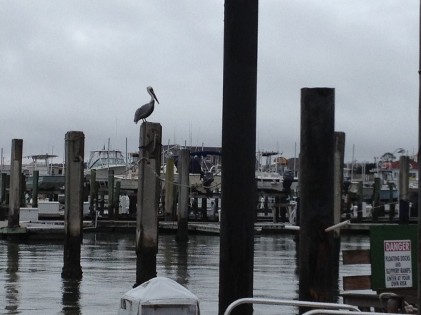 We had an observer watching our antics at the dock.