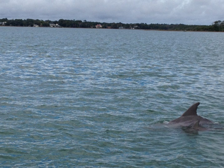 There are lots of dolphin sightings these days!