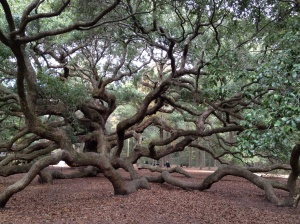 You really, really, really want to climb the Angel Oak when you see it . . . just magnificent!