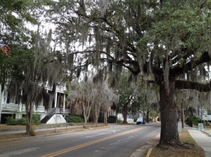 Walking the neighborhoods of Beaufort . . . love the Spanish moss!