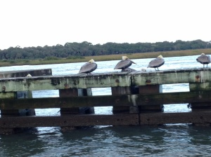 Pelicans watching us make our way through one of the bridges.