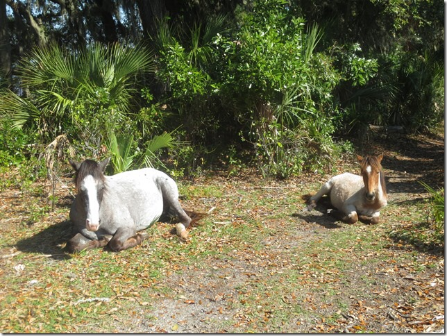 From Magnolia's blog and a visit about two weeks ahead of us: these horses were too lazy to even move out of the trail for the.