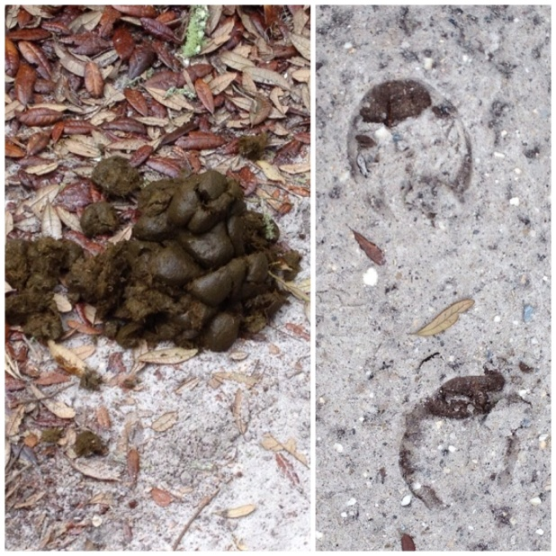 "Hoof prints and other ""evidence"" of horses. Hey - poop happens."