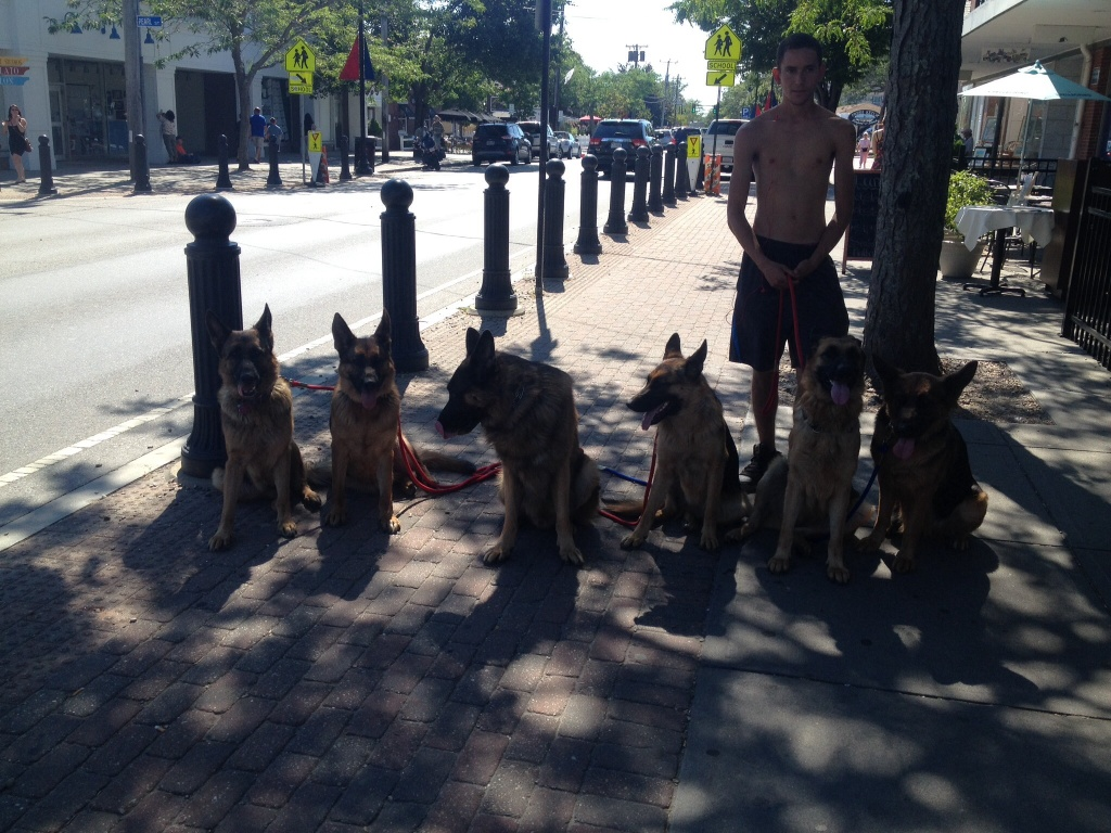 Frank captured this sight that you don't see every day! And this was only half of the pack. The guy said he has six more at home! They were VERY mannerly.